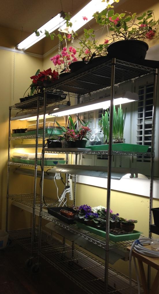 0 Shelves