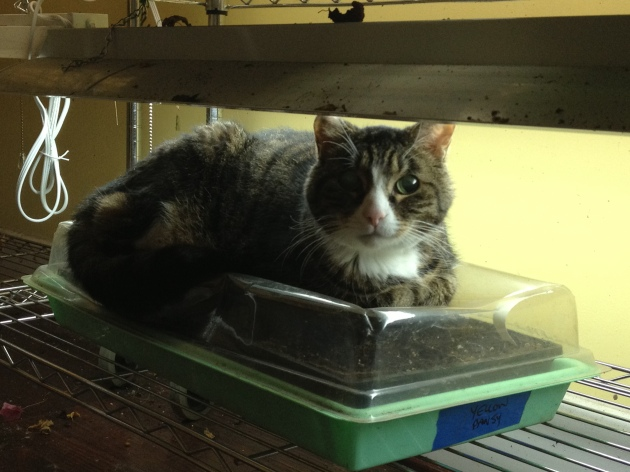 """Jack """"warms"""" the tomato and pepper seedlings."""