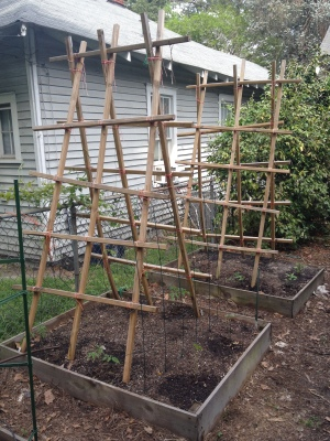 Tomato Ladders