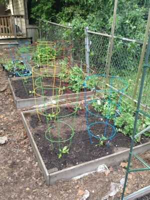 "Good Use for ""Tomato"" Cages: Peppers and Eggplants"